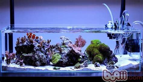 Aquascaping Tank 海水缸爆藻的原因 水族器材 波奇网百科大全