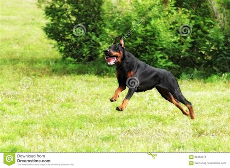 how fast do dogs run running fast www imgkid the image kid has it