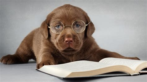 puppy book 21 study wallpapers book backgrounds images pictures freecreatives