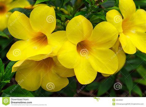 fiori tropicali nomi fiori tropicali gialli immagine stock immagine di fiore