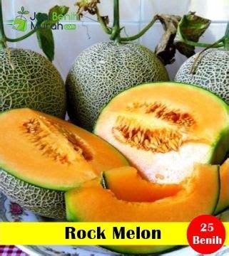 Benih Bibit Rock Melon Dainty benih rock melon maica leaf jualbenihmurah