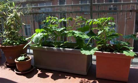 orto in terrazzo come fare come fare un orto in balcone giardino o terrazzo e