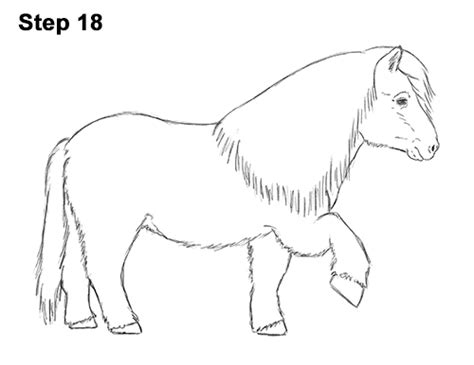 shetland pony coloring pages how to draw a pony