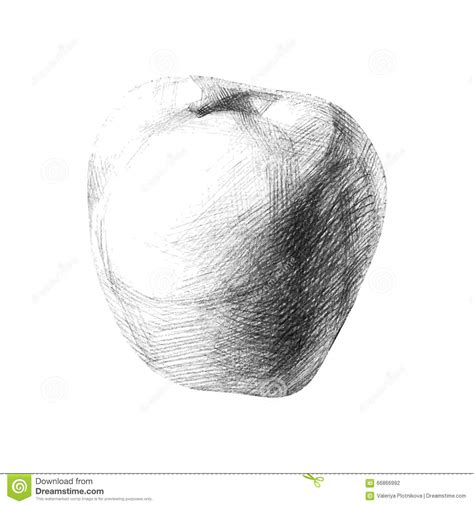 sketch by mac illustration with a pencil sketch apple stock vector