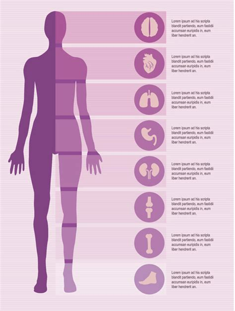 infographics human body medical infographic elements set vector free download
