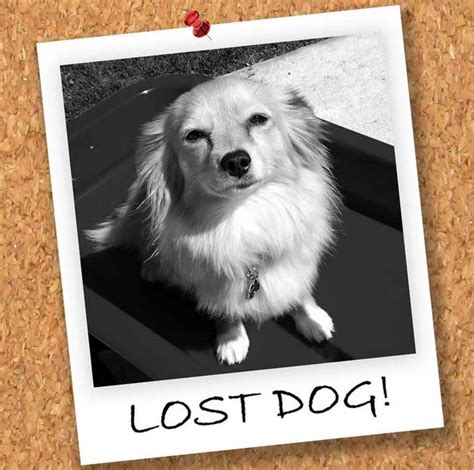 lost and found dogs related keywords suggestions for lost and found dogs