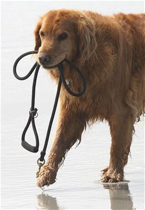 how to a without a leash 17 best images about i dogs on loyalty puppys and wallpaper