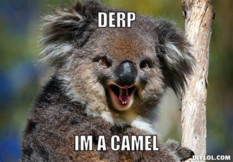 Koala Meme Generator - wolak s koality koala blog a koality blog by joshua