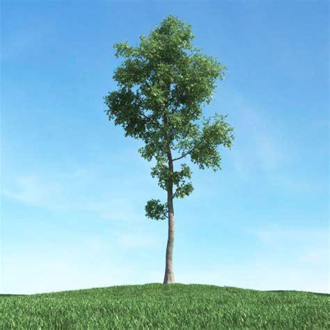 A Tree - green tree 3d model obj cgtrader
