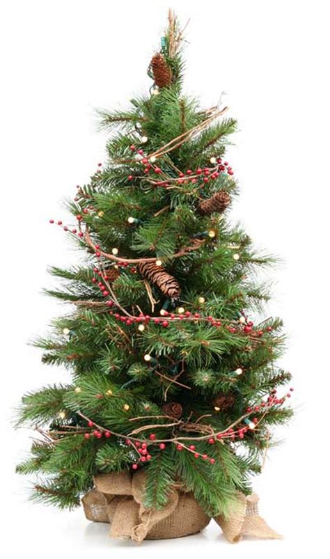 live trees for christmas small decorating with a live tree barts tree service