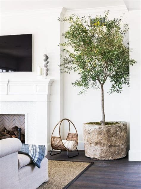 living room tree 25 best ideas about indoor trees on indoor tree plants fig tree and best indoor trees