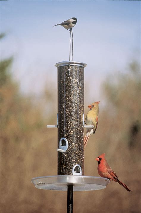 Where To Put Bird Feeder replayground recycling with a twist diy bird feeders