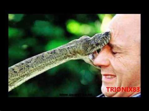 imagenes de animales y personas animales extra 241 os animales peligrosos atacando a personas