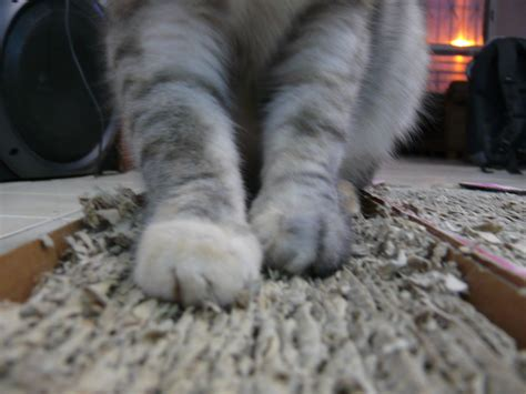 How To Stop Cat From On The Floor by File Corrugated Fiberboard Scratch Pad With Cat Jpg