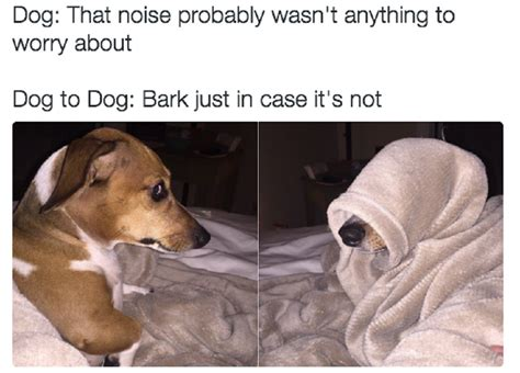these memes will make any dog owner feel more related than