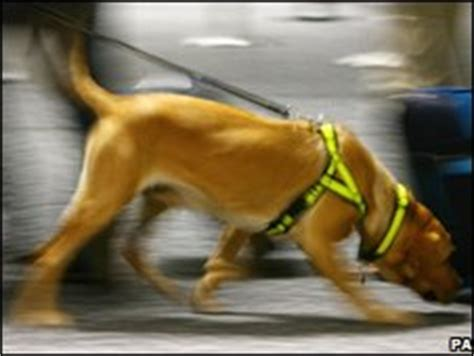 how are dogs trained to smell drugs news americas sniffer dogs in bedrooms