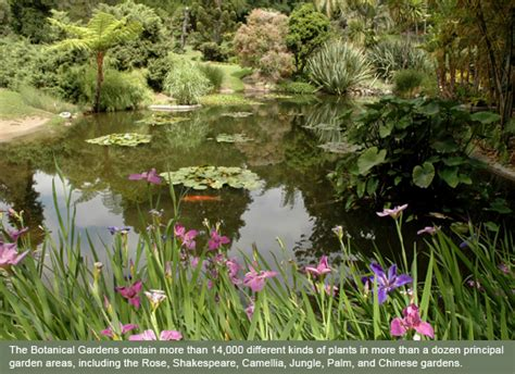 Botanical Gardens Huntington February 2014 Manuscript Road Trip