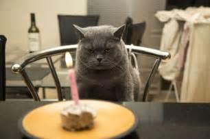 cat birthday buscar con google para re 237 r pinterest