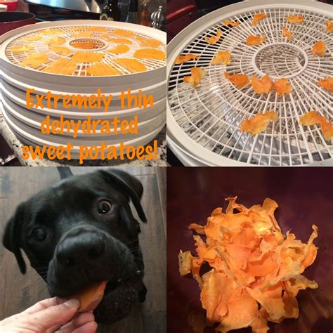 are cucumbers bad for dogs spoiling your dogs with 100 dehydrated organic sweet potato treats
