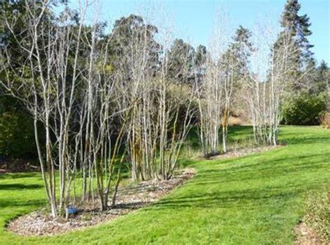 Tilden Botanical Garden Tilden Botanical Garden Review Of Regional Parks Botanic Garden Berkeley Ca Tripadvisor