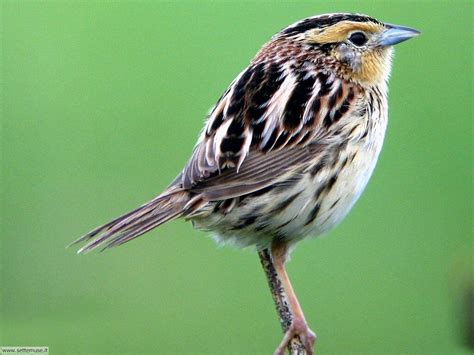 immagini di foto uccelli vari 4 per sfondi pc settemuse it