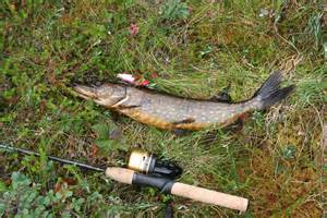 House Plans Free File Pike Fishing In Finland Jpg Wikimedia Commons