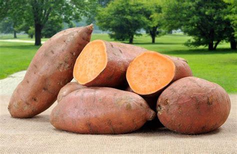 Deep Rooted Vegetables - growing fruit and vegetables in june quiet corner