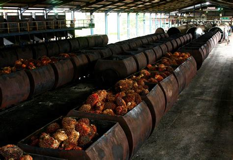 Minyak Kelapa Saat Ini daftar nama nama pabrik kelapa sawit di sumatera