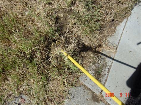 Grass Removal by Bermudagrass Removal Killer Bermudagrass