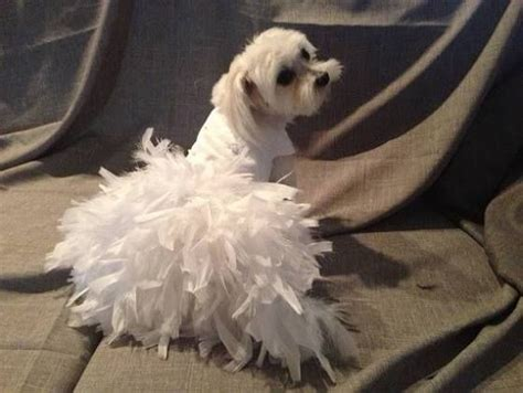 Wedding Attire For Dogs by 25 Best Ideas About Wedding Dress On