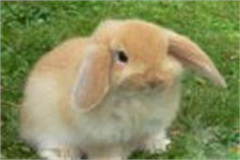 alimentazione coniglio nano cosa mangiare durante l allattamento