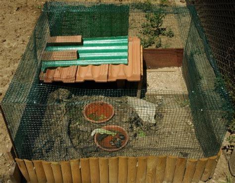 gabbie per tartarughe di terra come costruire un terrario per tartarughe di terra in