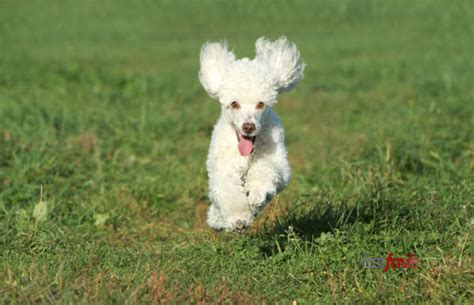 What Dogs Shed The Least by Least Shedding Dogs Breeds Picture Breeds Picture