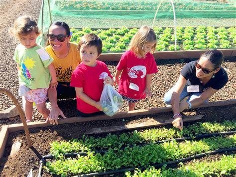 preschoolers visit kukuiula s farm the garden island