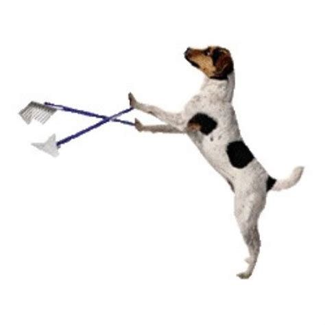 scoopers for dogs bebe s pet waste removal floral city florida 34436