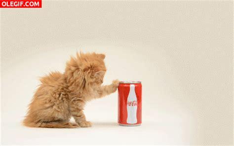 imagenes tumblr haciendo el amor gif gif este gato quiere coca cola gif 5984