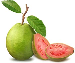 Obat Gastrul Per Biji fakta dari manfaat jambu biji untuk jantung obat penyakit jantung herbal
