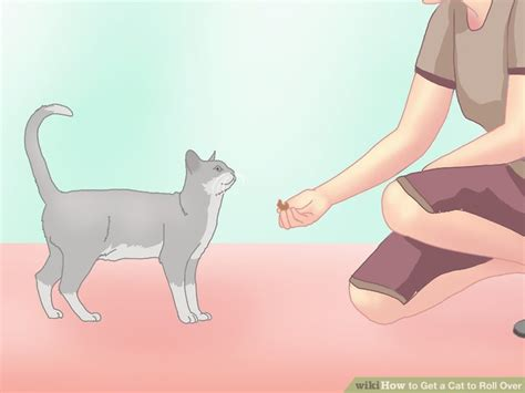 how to your to roll without treats how to get a cat to roll 10 steps with pictures wikihow