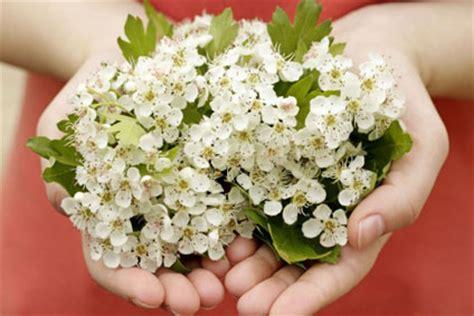 fiori per uomo pin fiori in libero da vettori on