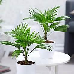 pflanzenversand gartenversand pflanzen shop baldur - Garten Versand Pflanzen