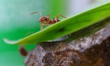 come eliminare le formiche dal giardino come eliminare le formiche da orto e giardino coltivare
