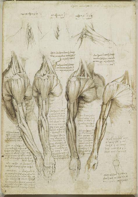 tavole anatomiche muscoli scheletro della gamba muscoli della spalla braccio e