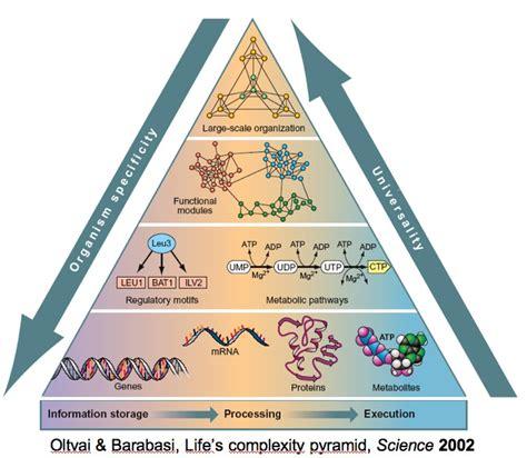 alimenti poveri di zuccheri le proteine gli alimenti proteici i lipidi o grassi i
