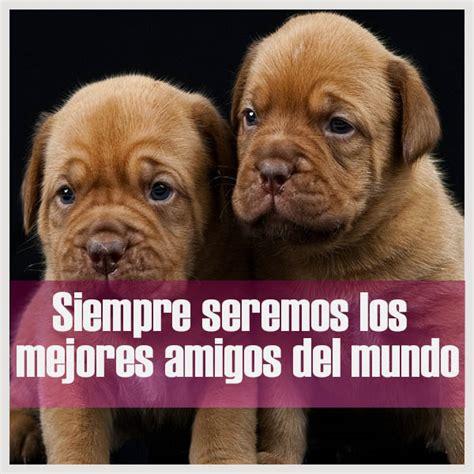 imagenes de amistad para whats im 225 genes de perritos con frases cortas bonitas para