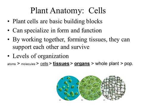 the basic building blocks of organizational structure mastering plant anatomy ppt video online download