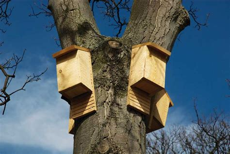 bat houses and more bat facts