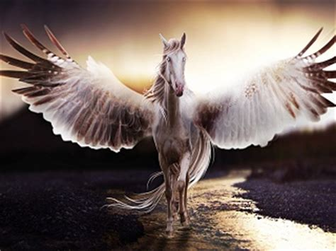 imagenes de unicornios y pegasos image gallery pegaso