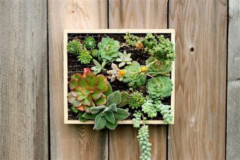 vertical succulent wall planter in easy steps diy