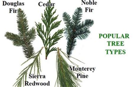 types of christmas trees and their advantages 28