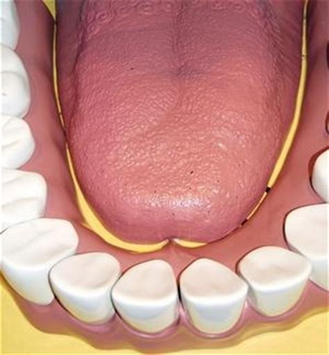 Stomach And Mucus Stool by Diseases Associated With Mucus In The Bowel Mouths The